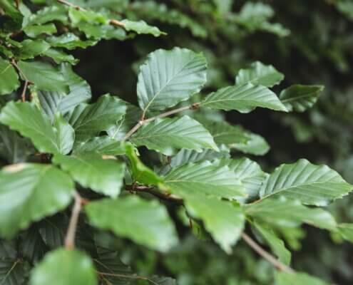 Blade - fotosyntese - Hvordan fungerer det?